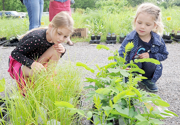 From the left: Six-year-old Natalie Allen and three-year-old Jamie Allen, of Racine, enjoy their Saturday morning checking out the plants at the Missouri Wildflower Nurseries plant sale at Wildcat Glades. Each year the nursery makes a donation to Wildcat Glades that is used for landscaping and conservation.<br /> Globe | Laurie Sisk