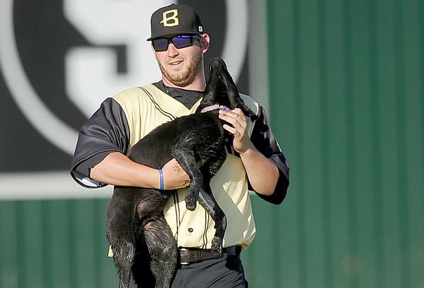 Blasters pitcher Josh Hodges rescues a rambunctious pup that decided to become a part of the game after running into centerfield during the Blasters' exhibition game against the New Jersey Black Sox on Thursday night at Miami's Wardog Stadium.<br /> Globe | Laurie Sisk