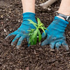 Globe/Roger Nomer<br /> Val Frankoski plants butterfly milkweed at Ewert Park on April 28, 2017.