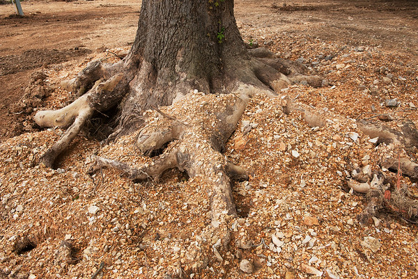 Globe/Roger Nomer<br /> Gravel from recent flooding of Elk River covers a tree root at Shady Beach Campground.