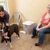"Ken and Stephanie Rothman get acquainted with potential adoptee ""Noah,"" an Anatolian Shepherd, on Thursday at the Joplin Humane Society. The shelter is full of large dogs ready for adoption.<br /> Globe 