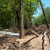 Globe/Roger Nomer<br /> Trails at Wildcat Glades have been washed out by recent flooding.
