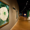 """The Beyond: Georgia O'Keeffe & Contemporary Art"" opens on Saturday at Crystal Bridges Museum of American Art.<br /> Globe 