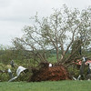 Trees are damaged by a tornado as seen on Wednesday near Wheaton.<br /> Globe | Roger Nomer