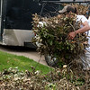 Lorenzo Dailey helps clean up tree debris in the Briarbrook area of Carl Junction on Tuesday.<br /> Globe | Roger Nomer
