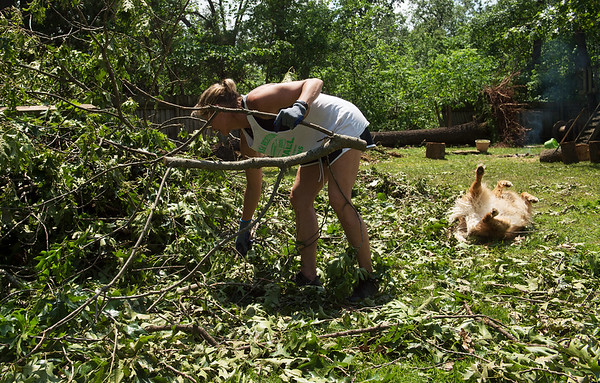 Kassie Endicott collects tree limbs as her dog Marlee enjoys the fallen leaves along Joplin Road outside of Carl Junction on Friday.<br /> Globe | Roger Nomer