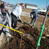 Globe/Roger Nomer<br /> (from left) Chadalee Durham, Joplin, Billie Mullins, Joplin, and Steve Hammonds, Joplin, plant a tree along Kentucky Street for a Habitat for Humanity project in conjunction with NASCAR on Tuesday morning.