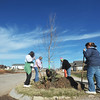 Globe/Roger Nomer<br /> A group of volunteers plants a row of trees along Kentucky Street for a Habitat for Humanity project in conjunction with NASCAR on Tuesday morning.