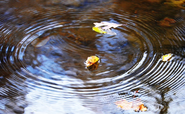 Falling leaves make circular ripples in the water of Silver Creek Monday afternoon, Nov. 4, 2013, at Wildcat Glades Park.<br /> Globe | T. Rob Brown