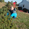 Globe/Roger Nomer<br /> Jace Cartright, 9, Webb City, helps his father Johnny carry the family's Christmas trees on Friday at Bridgestone Tree Farm in Webb City.