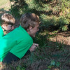 Globe/Roger Nomer<br /> Gavin, 7, and Chandler, 16, McAtee, Nixa, watch their father cut down a tree on Friday at Bridgestone Tree Farm in Webb City.