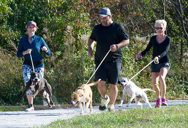 "From the left : Joplin Humane Society volunteers Sara Bybee, Rob Singh and Kelly Johnson take exuberant pups ""Ray Ray,"" ""Gypsy"" and ""Willodean"" for a run on Thursday at the Joplin Humane Society.<br /> Globe 