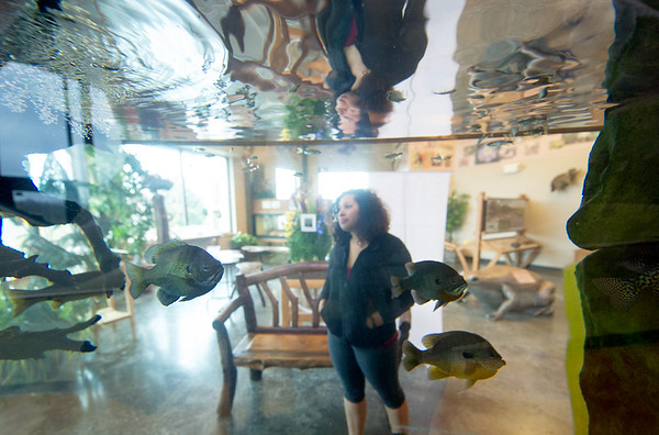 Destiny Presley checks out the fish inside the tank at the Wildcat Glades Conservation and Audubon Center on Friday.<br /> Globe | Laurie Sisk