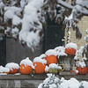 Snow falls on pumpkins in Carthage on Monday.<br /> Globe | Roger Nomer