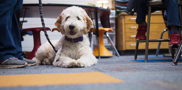 Maple is assigned to Kate Tupper's second grade at Royal Heights Elementary. <br /> Globe | Roger Nomer
