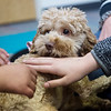 Students pet Bridget on Tuesday at Royal Heights Elementary. Getting to play with the dogs is offered as a reward to students at the school.<br /> Globe | Roger Nomer