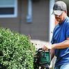 Mike Kresyman of Carthage trims a hedge Sunday afternoon, Oct. 13, 2013, in the 1900 block of East 24th Street. Kresyman works for his brother-in-law, owner of Steve Plew Lawn Service. Despite an early rain, the day cleared up enough for people to work outside in Joplin.<br /> Globe | T. Rob Brown