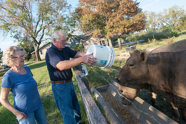 Globe/Roger Nomer<br /> Donna and Herb Winslow feed cattle on Tuesday at their farm in Carthage.
