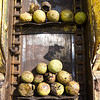 Walnuts rest on a conveyor before going through a huller on Saturday in Neosho.<br /> Globe | Laurie Sisk