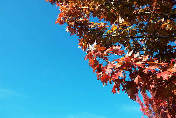 Globe/Roger Nomer<br /> Fall colors appear on trees at Forest Park Baptist Church on Tuesday.