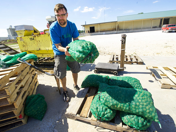 Brady Oakes, of Southside Feed and Farm Supply  in Neosho, lifts a 50-lb. bag of hulled walnuts on Saturday in Neosho.<br /> Globe | Laurie Sisk