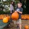 Globe/Roger Nomer<br /> Daxan Davis, 5, Oronogo, strains to carry a pumpkin as he helps his cousin Michaela Nelson, 11, Carl Junction, select pumpkins at Fredrickson Farms on Friday in Carl Junction.