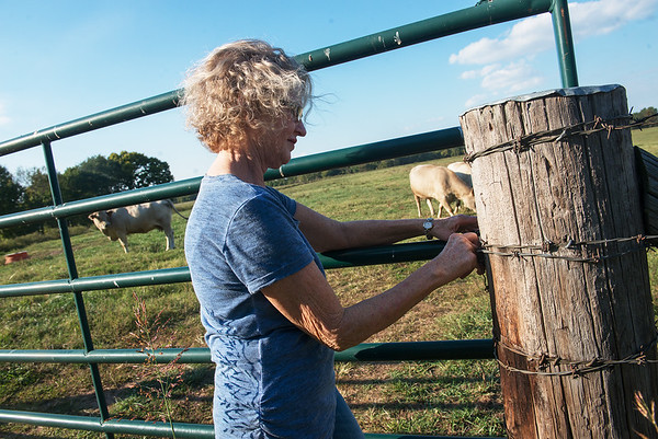 Globe/Roger Nomer<br /> Donna Winslow closes a gate on Tuesday at the family's farm in Carthage.