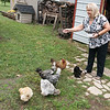 Sharon Rogers feeds her chickens on Wednesday morning.<br /> Globe | Roger Nomer