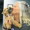 """Olivia,"" a young yorkshire terrier/shih tzu mix puppy, gives a little sugar to Carthage Humane Society Director Deborah Bell on Wednesday. The shelter will celebrate its 70th anniversary on Saturday.<br /> Globe 