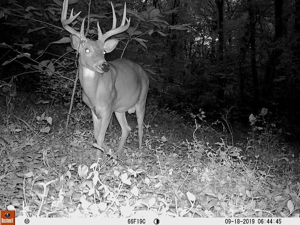 Photo of a deer captured near Pittsburg from the Snapshot USA project.<br /> Photo Courtesy PSU