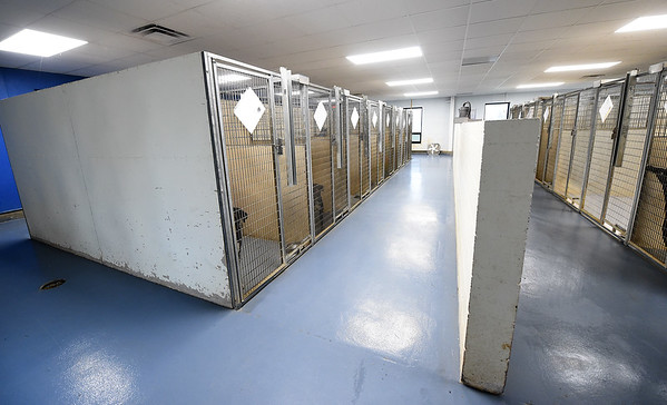 Among others improvements this year at the Carthage Humane Society is a freshly painted floor in the dog kennel area. The shelter will celebrate its 70th anniversary on Saturday.<br /> Globe | Laurie Sisk