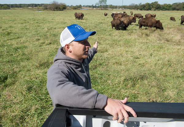 Mitch Albright talks about buffalo owned by the Quapaw Nation on Monday near Downstream Casino.<br /> Globe   Roger Nomer