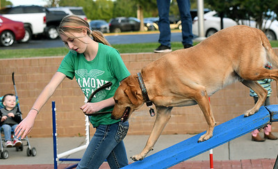"""Allison Brown, of Newton County 4-H, leads her trained K9 labrador retreiver, """"Twister"""" through an obstacle course during Third Thursday in Downtown Joplin. Globe 