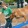 "Allison Brown, of Newton County 4-H, leads her trained K9 labrador retreiver, ""Twister"" through an obstacle course during Third Thursday in Downtown Joplin.<br /> Globe 