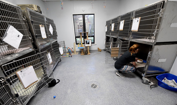 Juanita Logan fills bowls with food inside Gussie's Free Range Kitty Haven on Wednesday at the Carthage Humane Society. The shelter will celebrate its 70th anniversary on Saturday.<br /> Globe   Laurie Sisk