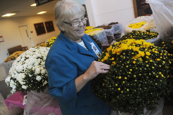 Globe/Roger Nomer<br /> Linda Craig, financial chairman for the Freeman Auxiliary, arranges mums for the organization's annual mum sale at Freeman Hospital on Wednesday.  The sale continues today at Freeman West, East and Neosho until supplies run out.  Proceeds from the sale benefit Freeman Hospital and Freeman Auxiliary community projects.