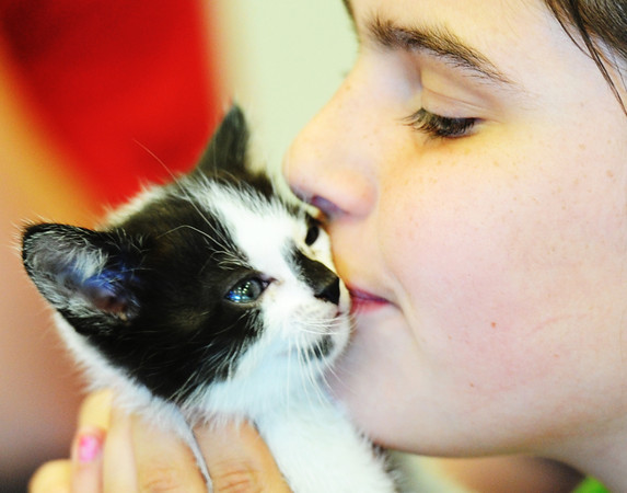 Brylee Burdick, a fourth-grade student in Shea Stehm's class at Columbia Elementary School, kisses one of Crystal's kittens Friday afternoon, Sept. 27, 2013. Crystal, who was named by the fourth-grade students, recently joined longtime Joplin Museum Complex mascot Percy in residency at the museum. Shortly after the cat was brought into the museum family, Executive Director Brad Belk found out Crystal was pregnant with a litter of kittens.<br /> Globe | T. Rob Brown