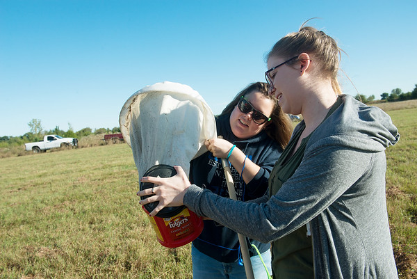 Globe/Roger Nomer<br /> Rachel Denton, a Missouri Southern senior from Lake of the Ozarks, left, and Bonnie Chastain, a senior from Coffeyville, Kan., collect insects on Tuesday at the MSSU prairie.