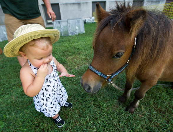 Seventeen-month-old Vivian Laidler vists with a dwarf pony during the Two Girls and a Zoo petting zoo at Little Balkans Days on Friday in Pittsburg.<br /> Globe | Laurie Sisk