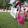 Globe/Roger Nomer<br /> Project Pink Flamingo in Webb City