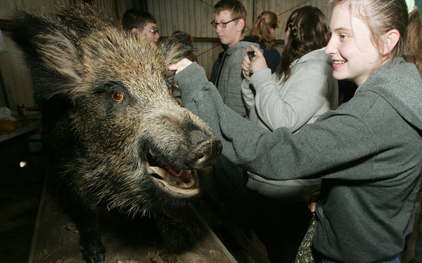Globe/Roger Nomer<br /> Hannah Curry, a junior at Monett High School, pets a stuffed feral hog on display at Ag Days at the Southwest Center on Friday.