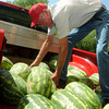 Globe/Roger Nomer<br /> Larry Cassatt, Oronogo, sorts watermelons at the Webb City Farmers Market on Tuesday.