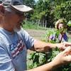 Globe/Roger Nomer<br /> Mike Simmons picks okra at his farm near Granby on Tuesday.