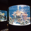 Three hundred and sixty degree pop-up tanks give visitors a view surrounded by fish on Tuesday at the Wonders of Wildlife National Museum and Aquarium.