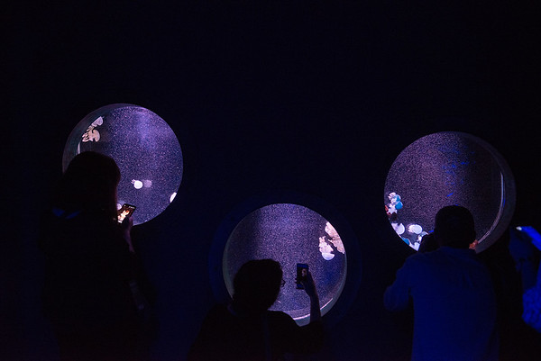 Visitors take photos of jellyfish on Tuesday at the Wonders of Wildlife National Museum and Aquarium.