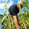Randal Switzer of the Chert Glades Chapter of Missouri Master Naturlaists, clears invasive plants and debris in preparation for the planting of pollinator-friendly plants at the Wildcat Glades trailhead near Redings Mill Bridge on Friday. <br /> Globe | Laurie Sisk