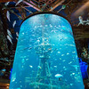 Globe/Roger Nomer<br /> The Shipwreck Room showcases tropical fish on Tuesday at the Wonders of Wildlife National Museum and Aquarium.