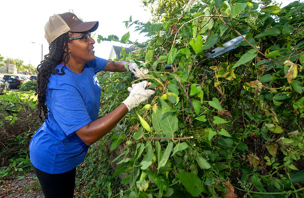 Melodee Colbert-Kean wages war on some stubborn vines on the 1200 block of Broadway during the 5th Annual A Brush with Kindness and Hearts & Hammers Event on Saturday. Scores of volunteers mowed, trimmed, painted and more at several local residences during the event, hosted by the Joplin Habitat for Humanity.<br /> Globe | Laurie SIsk