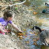 Four-year-old Meredith Blankenship makes friends with a goose as she feeds the ducks and geese on Tuesday afternoon at McEndoe Park. Blankenship is at Shoal Creek most everyday feeding the water fowl.<br /> Globe | Laurie Sisk