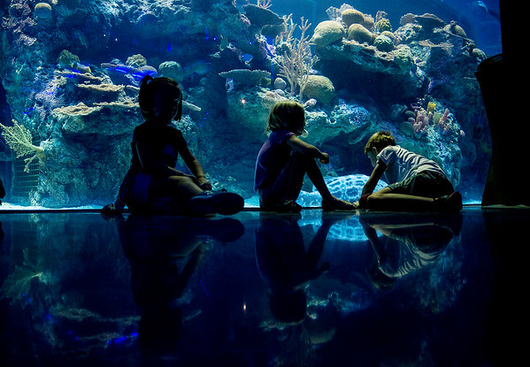 Globe/Roger Nomer<br /> (from left) Ainsley Barzee, 5, June, 5, and Max, 6, Muir take a break by an aquatic tank on Tuesday at the Wonders of Wildlife National Museum and Aquarium.